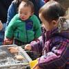 【終了しました】乳幼児のための自然体験プログラム 親子であおぞらおさんぽ会