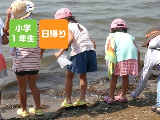 【7/22】ひとりでできるもん!だいいっぽ♪ ~海の貝がらちょきんばこをつくろう~