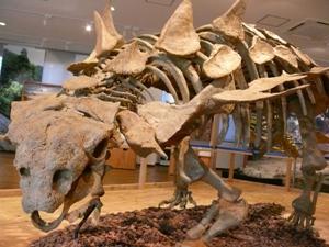 【5/2・日帰り】タイムスリップ!化石発掘調査隊 @ 元気村かみくげ・丹波竜化石工房ちーたんの館